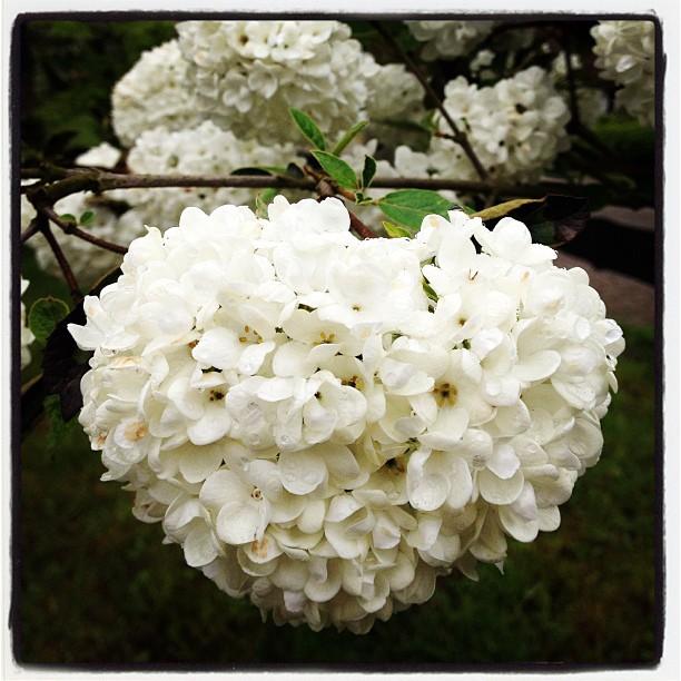 Flüsterweiss