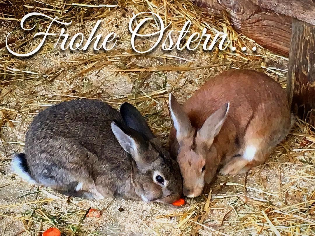 Frohe Ostern eiersuche osterhase familienzeit Weiterlesen rarr